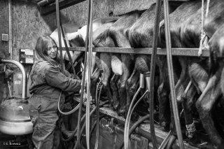 La traite des chèvres par Sophie à Saint-Sébastien. Décembre 2015