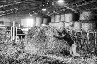 Amandine, éleveuse de vaches de race Angus à Clelles. Janvier 2016