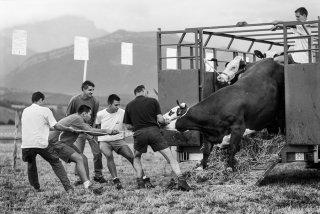 Comice agricole à Prébois. Août 2003