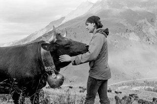 Une éleveuse rend visite à sa vache au cours de l'été sur l'alpage de la Léchère dans le Val Ferret. Valais, Suisse