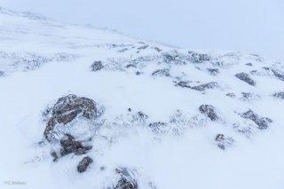 Pelouse et rochers givrés un matin dans le brouillard au pied du Grand Vermont. Isère