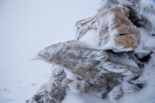 Rochers givrés un matin dans le brouillard au pied du Grand Vermont. Isère