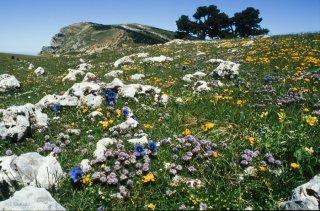 Tapis de fleurs du printemps sur le Glandasse