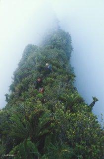 Ile Robinson Crusoé. Sur la crête qui mène au sommet du Yunque