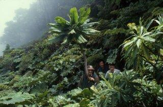 Ile Robinson Crusoé. Au sommet du Yunque avec 3 gardes du parc qui posent sous la yunquea, plante endémique de ce sommet
