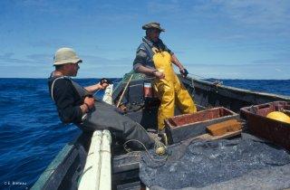 Ile Robinson Crusoé. Antonio et Popito pêcheurs de langoustes remontent les casiers