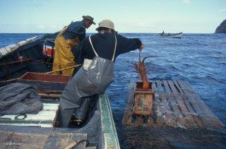 Antonio et Popito, pêcheurs de langoustes. En attendant l'arrivée du cargo qui arrive de Valparaiso une fois par mois, les langoustes sont stockées dans ces caisses