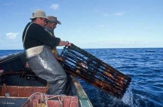 Ile Robinson Crusoé. Antonio et Popito pêcheurs de langoustes. Relevé des Casiers