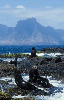 Ile Robinson Crusoé. Otaries devant le Mont Yunque