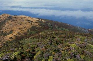 Le haut de l'île Alexander Selkirk