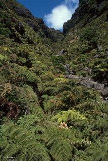 Quebrada (gorges) sur l'île Alexander Selkirk