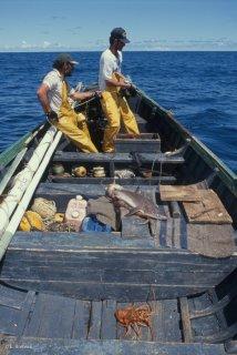 Ile Alexander Selkirk. Les pêcheurs de langoustes remontent les casiers