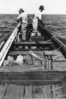 Ile de Selkirk. Pêcheurs de langouste