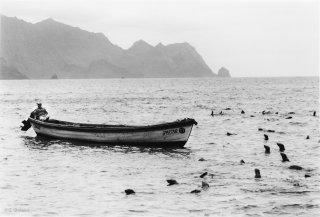Ile Robinson Crusoé. Un garde du parc attend dans la barque sous la surveillance des otaries