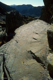 Vallée des Merveilles. Représentations de corniformes, d'attelages et de poignards