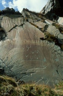 Vallée des Merveilles. Représentation de nombreux corniformes autour d'une hallebarde