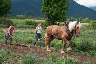 Labours avec le cheval