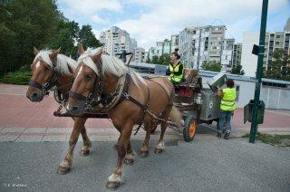 Ramassage des poubelles des parcs à Grenoble