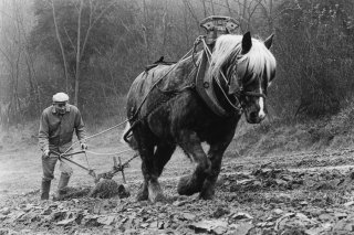 Pierre Nivon laboure avec son cheval à Saint-Martin d'Août dans la Drôme. Décembre 2002