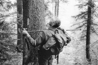Marquage et mesure des arbres à abattre par le garde ONF
