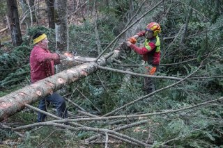 Eric Messa et Florian Mathieu, bûcherons, ébranchent un arbre. Chantier à Châtel en Trièves, Isère