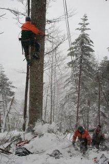 Leos redescend de l'arbre qui servira de pylône