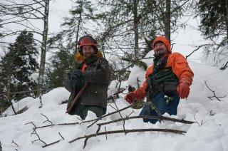 Tibor et Lubo, accrochent les grumes au câble