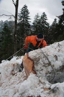 Accrochage d'un tronc prêt à partir à la descente