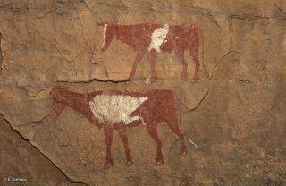 Peinture rupestre dans un abri sous roche, représentations de vaches