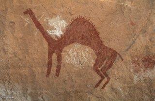 Peinture rupestre dans un abri sous roche, représentation d'un chameau avec son chamelier