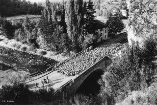 Transhumance des frères Menut. Passage du pont de Colmars les Alpes. Alpes de Haute Provence