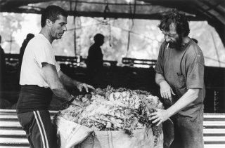 Thierry et Jean-Pierre ramassent la laine de la tonte. Var