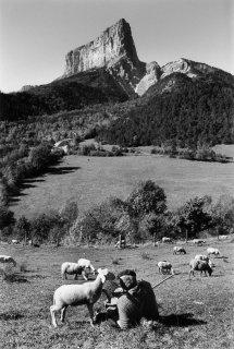 Berger devant le mont-Aiguille