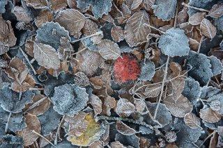 Tapis de feuilles gelées