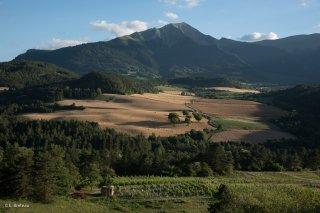 Vignes de Prébois avec le Jocou au loin