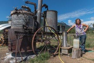 Plantamarine, distillation de plantes aromatiques et médicinales à Monestier du Percy