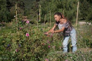 Jardins du centre écologique Terre Vivante à Mens