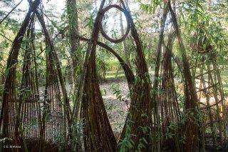 Bambouseraie du centre écologique Terre Vivante à Mens