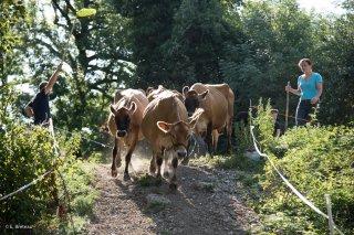 La ferme de Bartabelle à Saint-Guillaume, élevage de vaches Jersiaises et fabrication de yaourts et de flancs