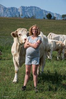 GAEC du Champs fleuri à Sinard, élevage de boeufs et veaux charolais
