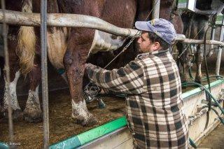 GAEC le Petit Monétéron à Monestier de Clermont, transformation produits laitiers