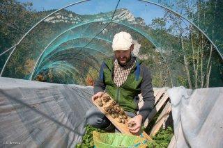 La forêt du possible, élevage d'escargots chez Christophe Silvin à Monestier du Percy. Trièves, Isère